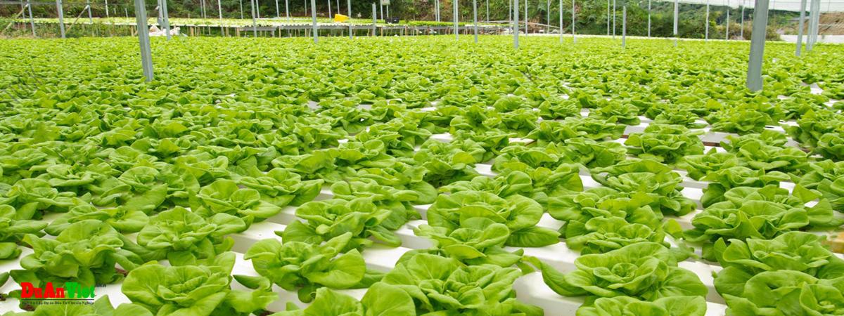 Dự án đầu tư sản xuất rau sạch