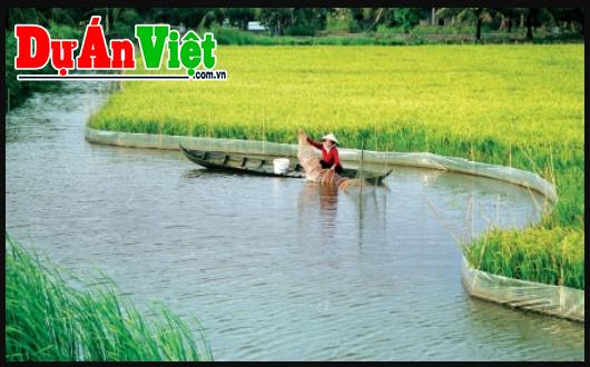 Chuyển đổi đất lúa kém hiệu quả sang nuôi trồng thủy sản công nghệ cao ở Vùng Đồng bằng sông Cửu Long