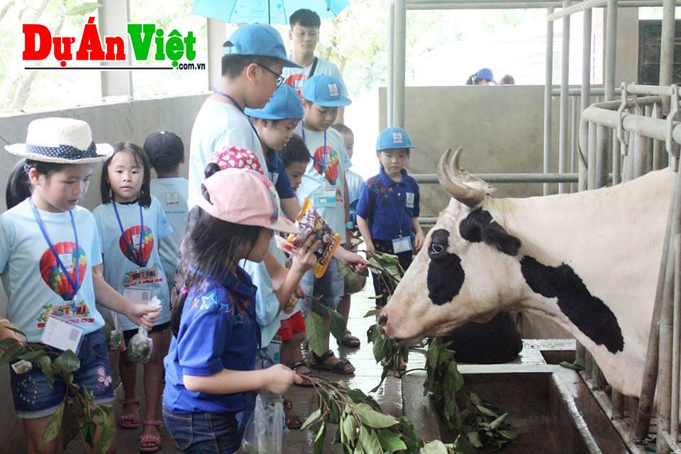 Dự Án Việt tư vấn thành công dự án Xây dựng nông trại giáo dục Eco tại Vũng Tàu