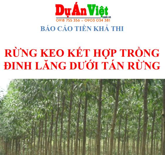 Báo cáo tiền khả thi Rừng keo kết hợp trồng Đinh Lăng dưới tán rừng