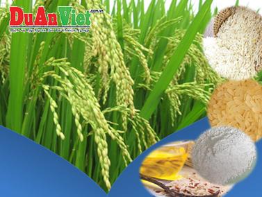 Đầu Tư Chuỗi Giá Trị Gia Tăng Sản Phẩm Từ Lúa, Gạo