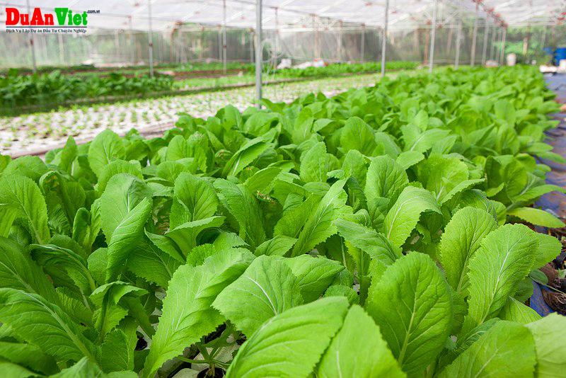 Dự án nông nghiệp hỗn hợp tại Nam Thái Sơn - Hòn Đất - Kiên Giang