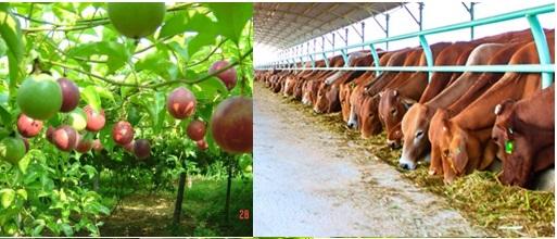 Dự án trang trại trồng trọt - chăn nuôi kết hợp