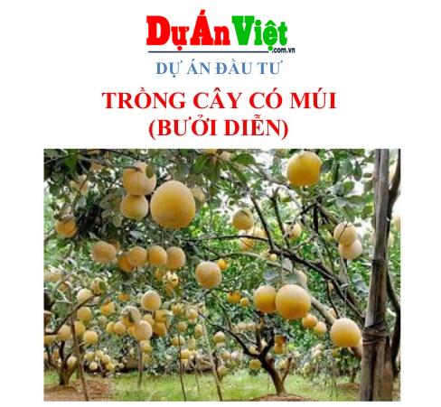 Dự án đầu tư cây ăn quả có múi Phú Thọ