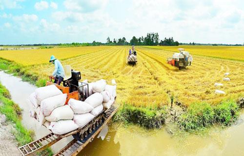 Dự án thu mua nông sản Vĩnh Long