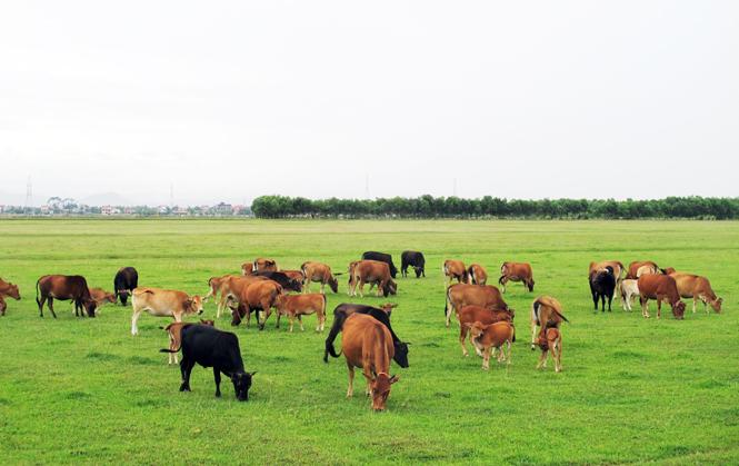 Dự án trang trại chăn nuôi kết hợp tại Sóc Sơn