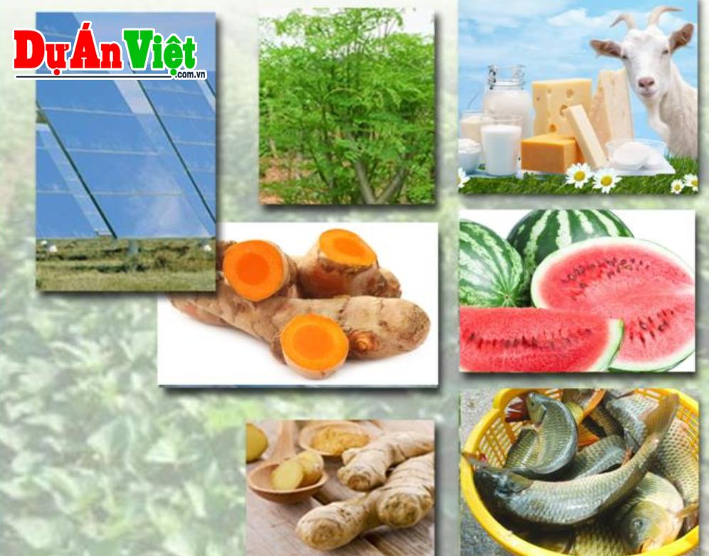 Thuyết minh Dự án Nông lâm nghiệp thuộc cụm dự án Điện mặt trời Xuân Thiện Ea Súp