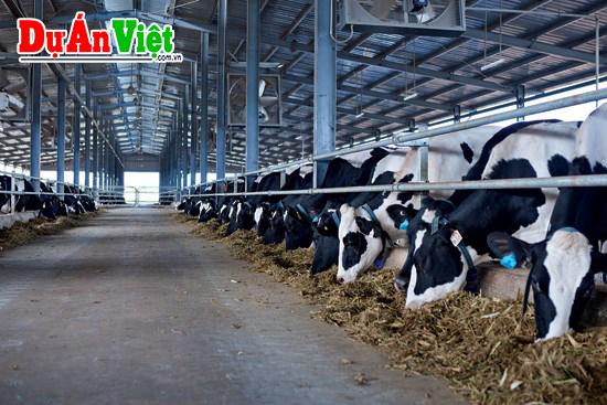 Thuyết minh dự án trang trại chăn nuôi bò