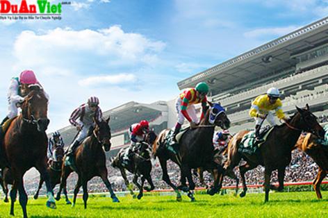 Dự án trường đua ngựa và khu nghĩ dưỡng phức hợp