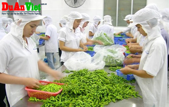 Tư vấn dự án sơ chế rau củ quả Tân Phú Trung Củ Chi