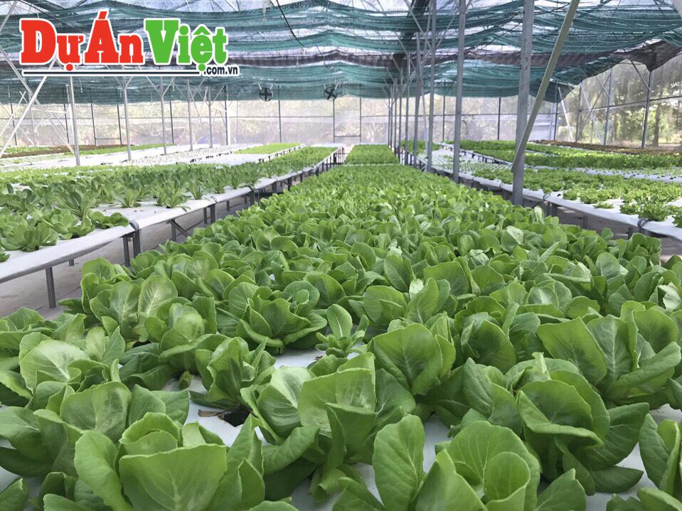 Dự án Xây dựng khu sản xuất  Nông nghiệp Công nghệ cao trong nhà màng và Sản xuất rau hữu cơ