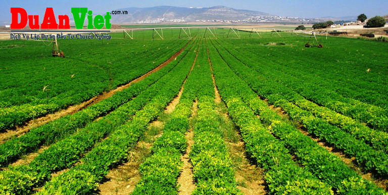Tư vấn dự án nông nghiệp hỗn hợp Hòn Đất Kiên Giang