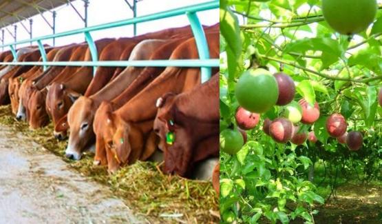 Dự án Trang trại trồng trọt kết hợp chăn nuôi _ Thái Bình