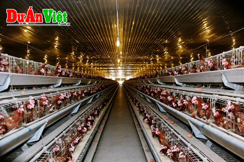 Dự án Nông nghiệp và Chăn nuôi Công Nghệ Cao