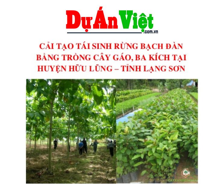 Dự án cải tại rừng bạch đàn bằng trong cây gáo, ba kích Lạng Sơn
