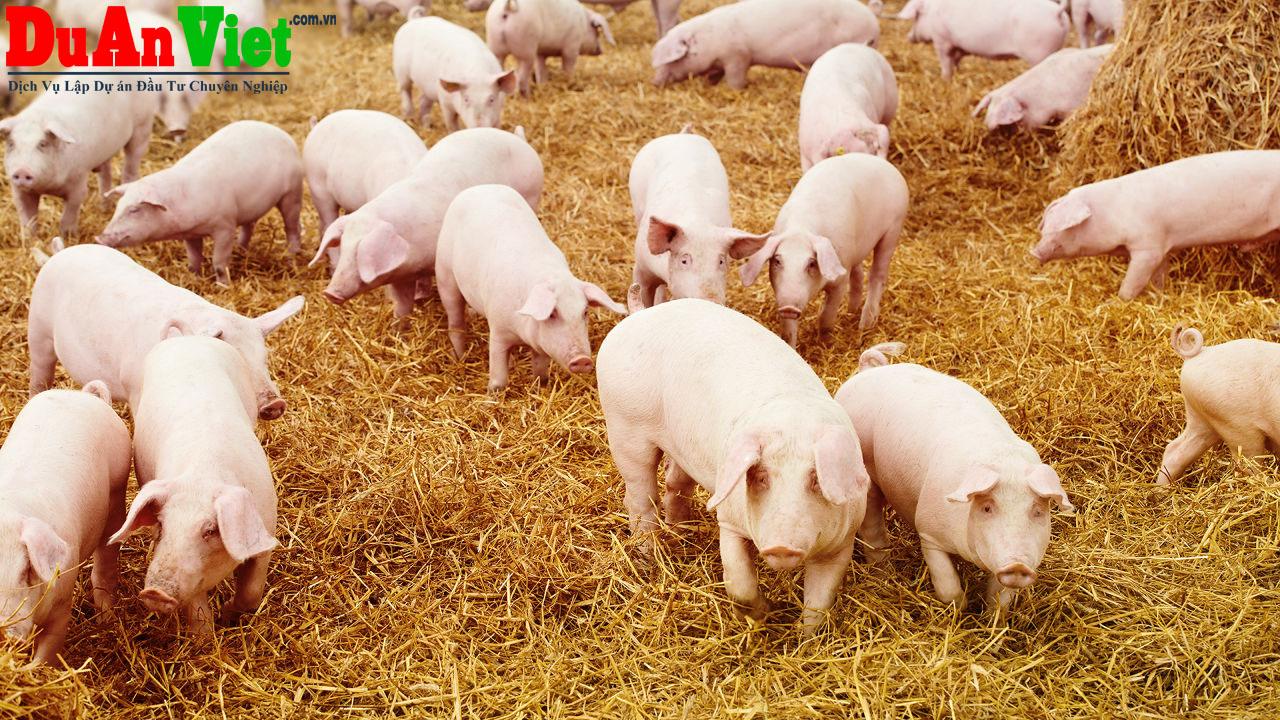 Dự án chăn nuôi heo thịt - Xuân Lộc, Đồng Nai
