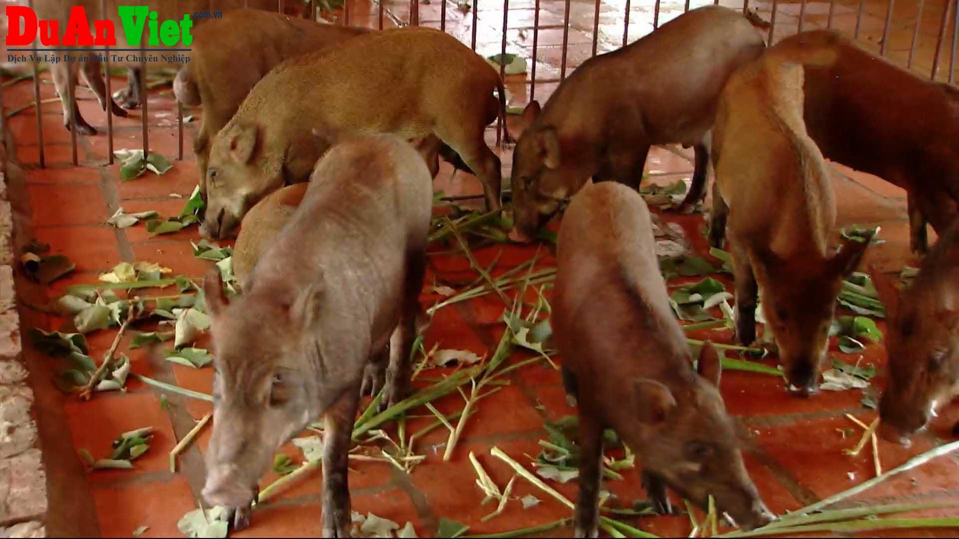 Trang trại chăn nuôi heo - Vĩnh Cửu Đồng Nai