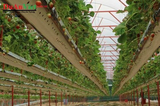 Thuyết minh Dự án nông nghiệp và chế biến thực phẩm công nghệ cao YuNa