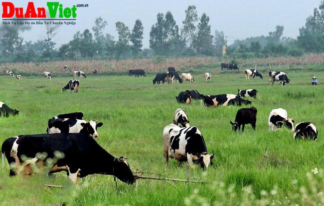 Đầu tư khu trang trại chăn nuôi kết hợp tại Sóc Sơn