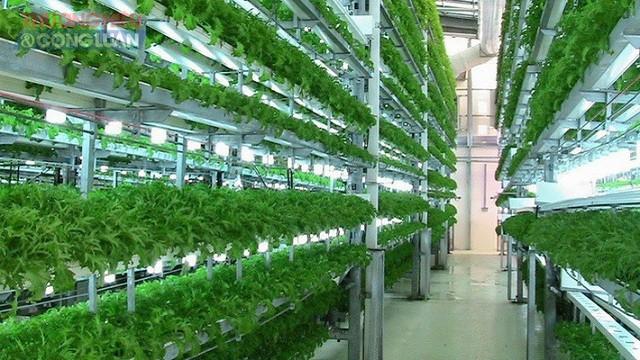 Dự án xây dựng khu nông nghiệp công nghệ cao kết hợp tham quan du lịch