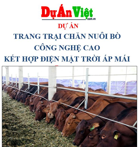 Dự án trang trại chăn nuôi bò tỉnh Kiên Giang