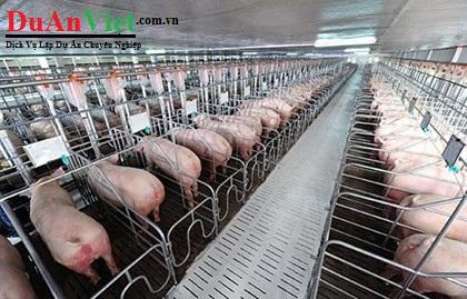 Dự án đầu tư chăn nuôi heo thịt Xuân Lộc