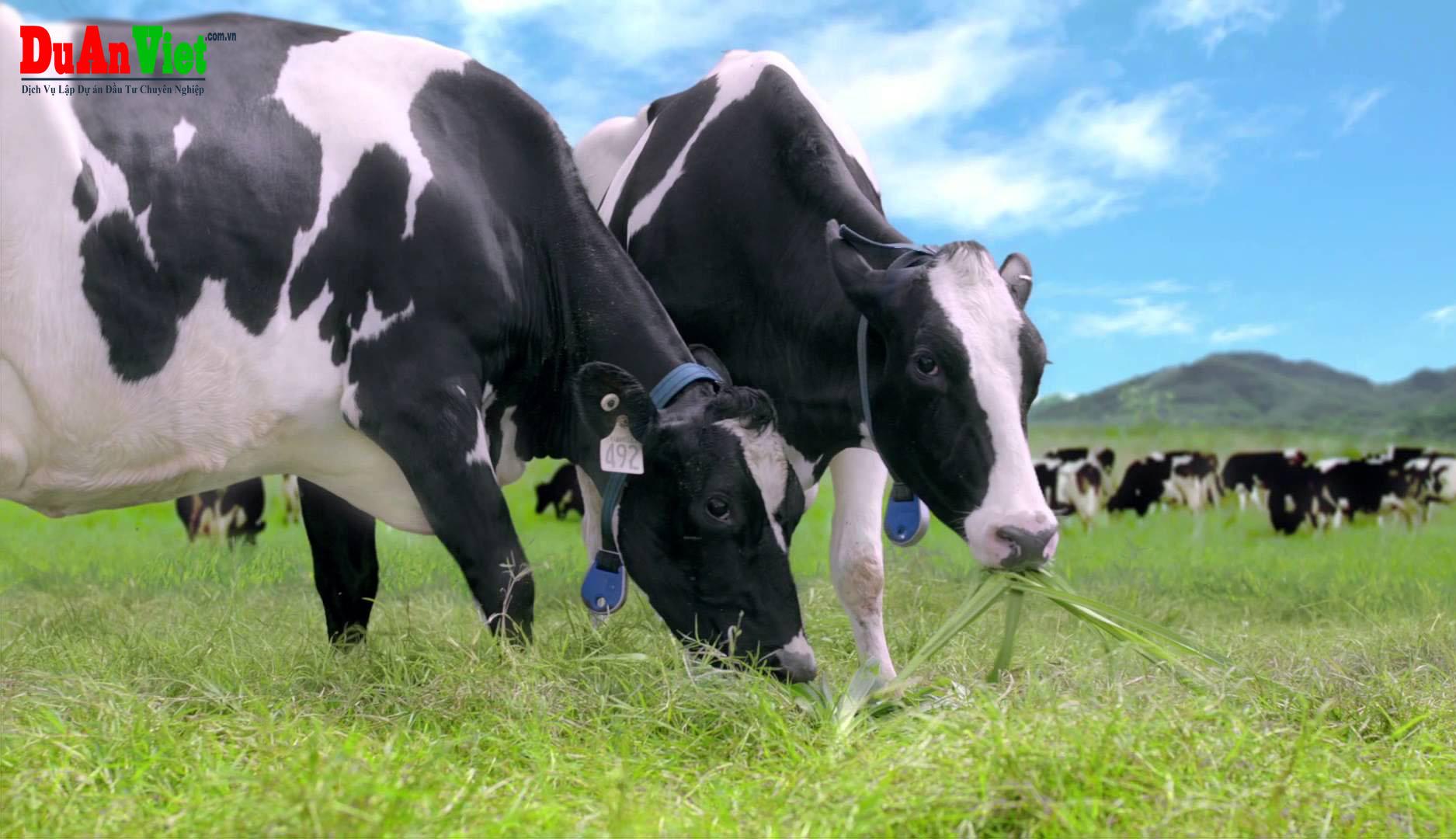 Dự án nông trường bò sữa Cẩm Thủy - Thanh Hóa
