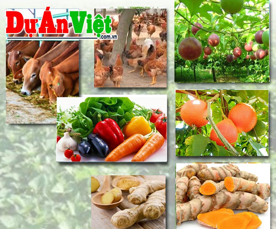 Dự án đầu tư mở rộng sản xuất nông nghiệp và thu mua nông sản